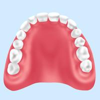 レジン入れ歯(保険診療)